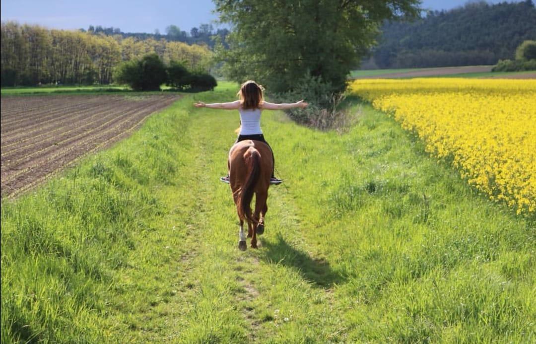 Freiheit am Pferd